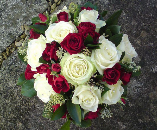 Delphinium Flowers