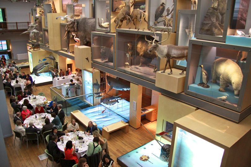 Great North Museum: Hancock