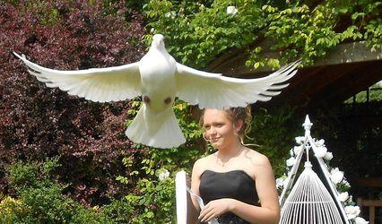 Destiny White Doves Wedding Release