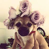 Cute puppy ready for a wedding