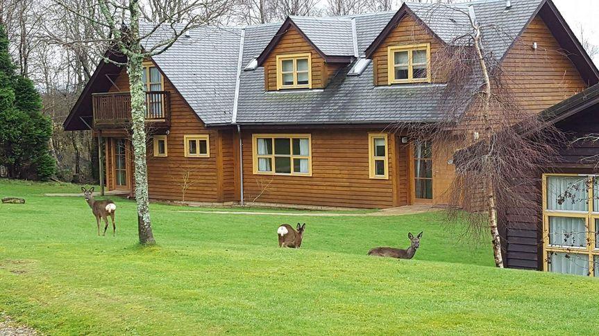 Lodge and deer