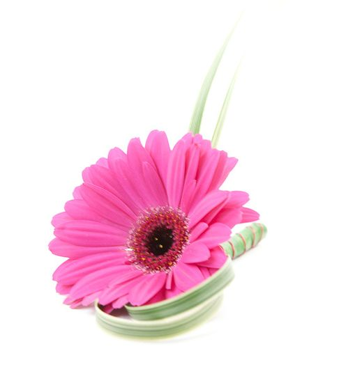 Gerbera Button Hole