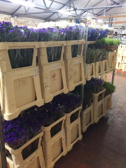Wholesale roses