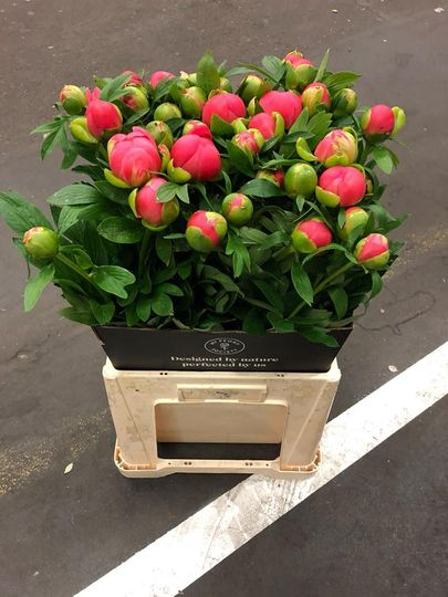 Peonies and tulips available