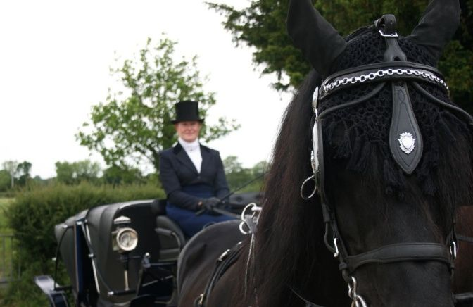 Black horse with carriage