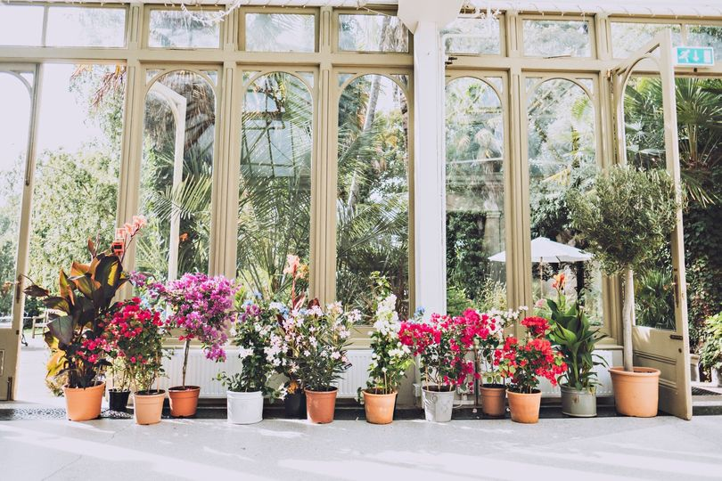 Summer in the conservatory
