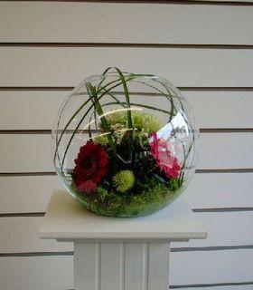 Fish Bowl Displays