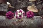 Flowers on logs