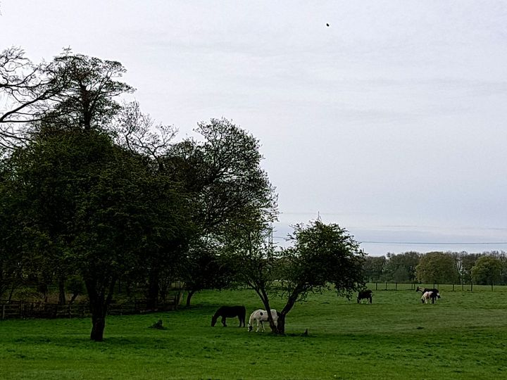The Horse Riding Grounds