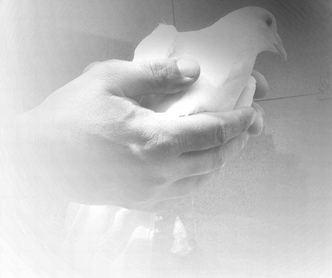 Releasing a bird