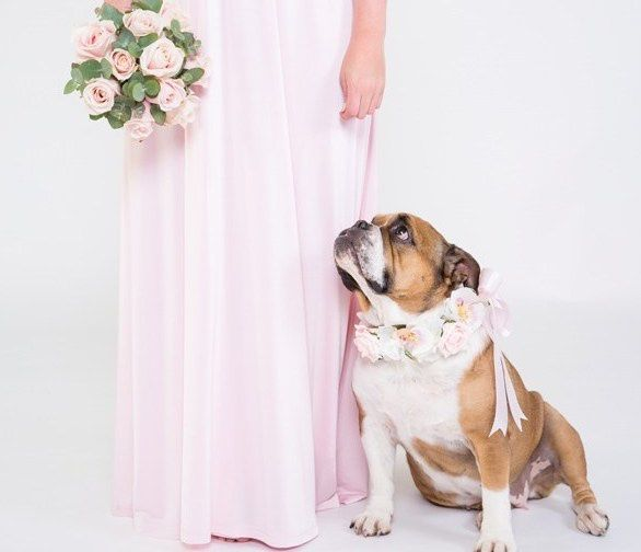 4Paws Wedding Dog Chaperone Service