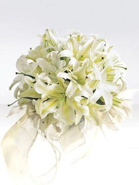 Exotic white lily