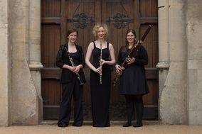 Ulmus Trio