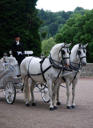Premier horse drawn carriage