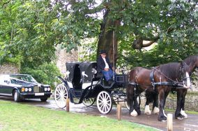 South West Shire Horses