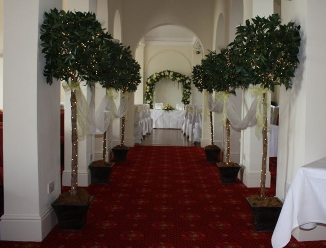 Lit bay trees £25 each to hire  6ft tall