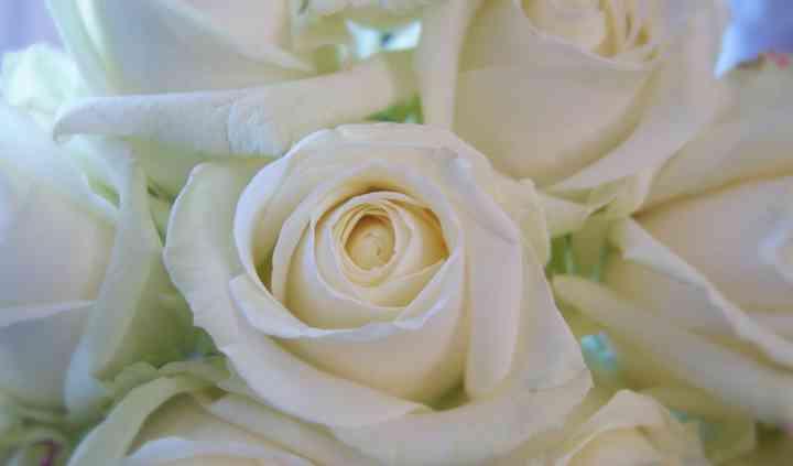 Vanilla roses