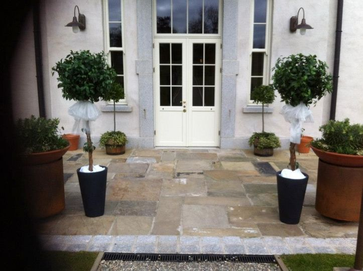 Bay trees to hire