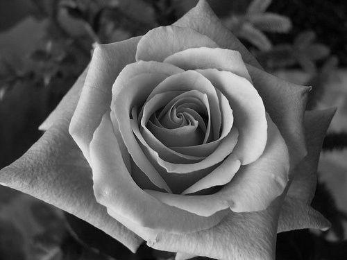 Nya Rose