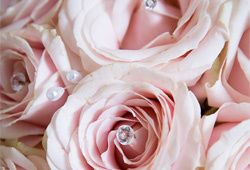 Closeup of Bridal Roses