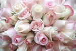 'Pretty in Pink' Roses Bouquet